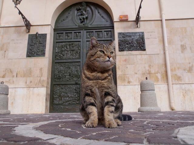 イタリアの猫・ドメニコ by 劇場版 岩合光昭の世界ネコ歩き