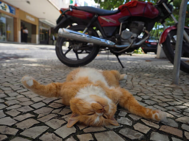 道端でお腹を出して寝る猫 by 劇場版 岩合光昭の世界ネコ歩き