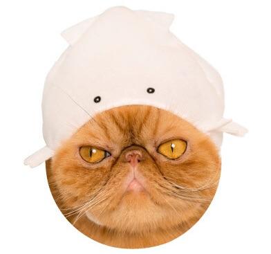 猫のかぶもの「イカ」