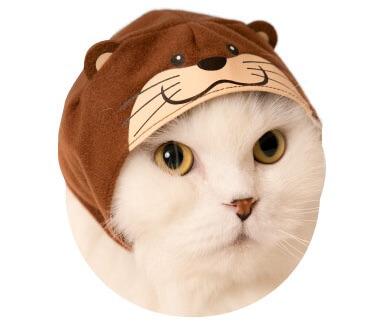猫のかぶもの「コツメカワウソ」