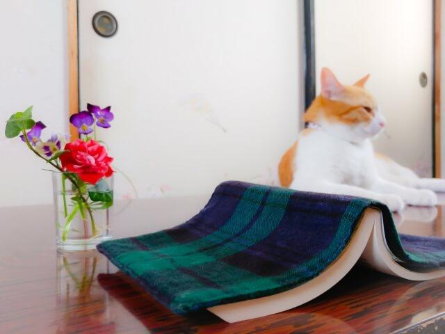 猫&本&書籍のイメージ写真