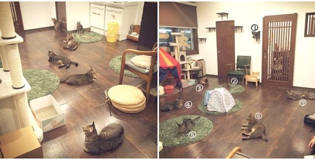 猫カフェ「cat cafe しましま屋」にいる猫は全部キジトラ