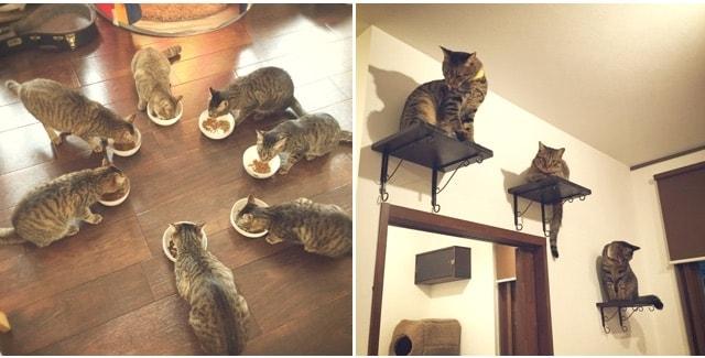 キジトラ専門猫カフェ「cat cafe しましま屋」のご飯タイムの様子