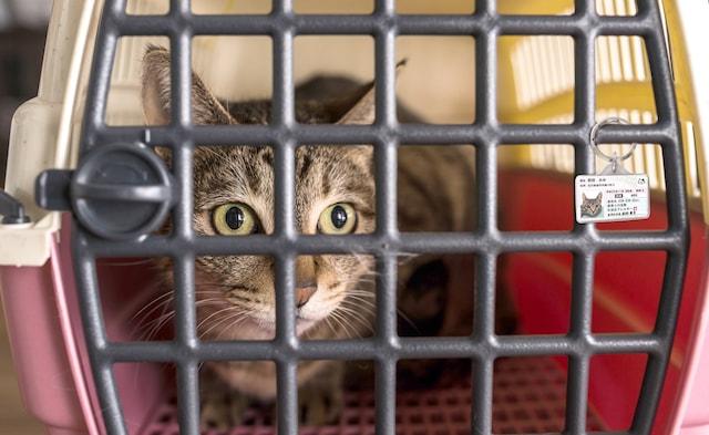 猫用ケージに取り付けられるマイニャンバー迷子札