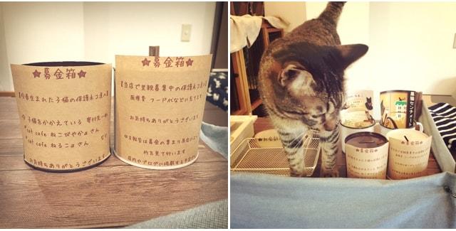 キジトラ専門猫のカフェ「cat cafe しましま屋」にある保護猫たちのための募金箱