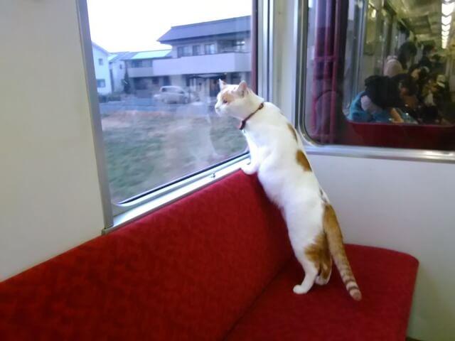 動く猫カフェ!養老鉄道の車内で子猫と触れ合える 「ねこカフェ列車」が走るニャ