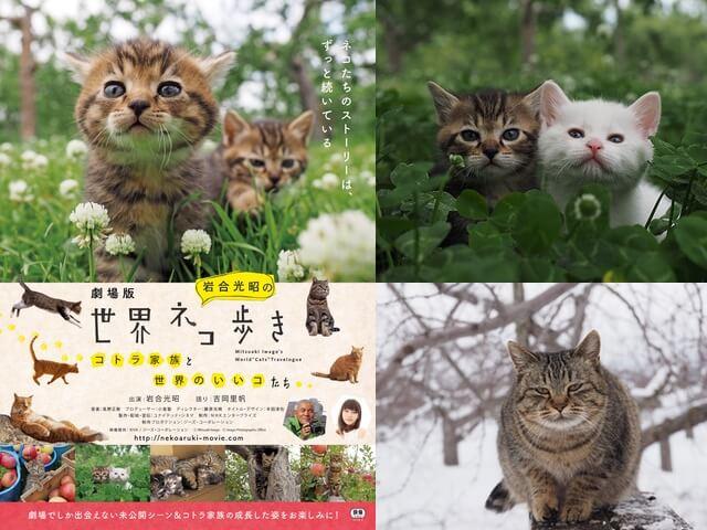 10月に上映予定の「劇場版 岩合光昭の世界ネコ歩き」最新フォトを公開