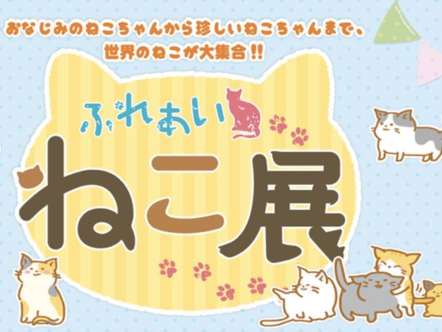 世界中の珍しい猫と触れ合える「ふれあいねこ展」札幌の東急百貨店で開催
