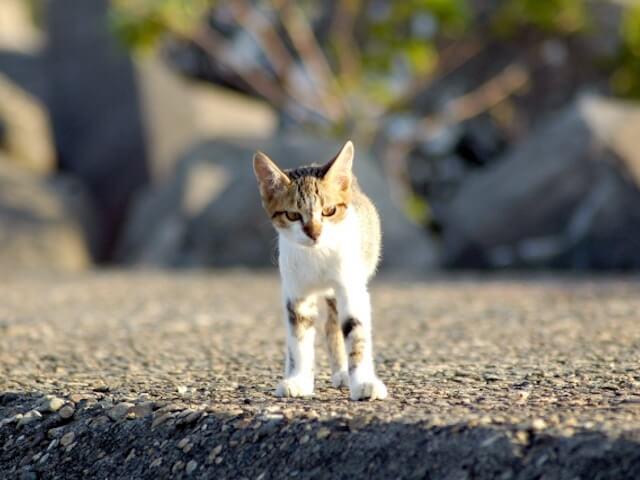 岩手大学、ネコの糞尿被害を防止する新技術の開発に成功したと発表
