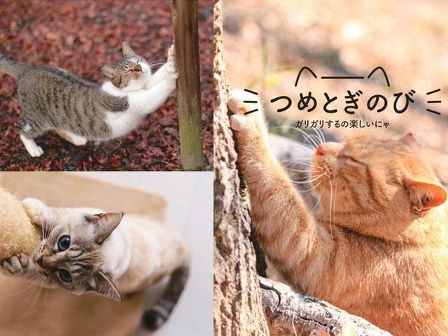 猫の気分でポージング!ネコヨガを楽しむ書籍「のび猫ストレッチ」