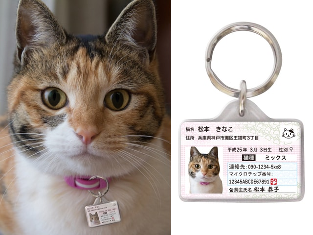 愛猫の身分証明書「マイニャンバーカード」迷子札バージョンが登場