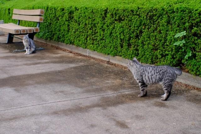 野良猫のイメージ写真1