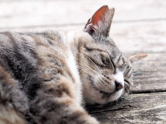猫に優しいイメージ写真