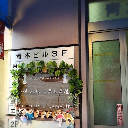猫カフェ「しましま屋」の看板