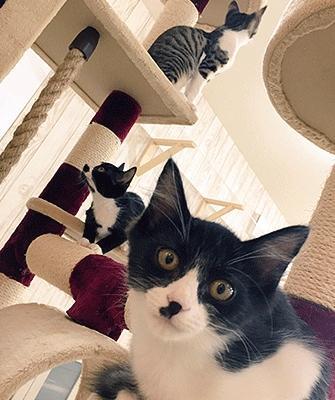 譲渡型猫カフェ にゃんくるの猫たち