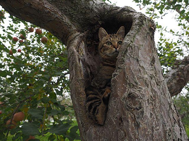 「劇場版 岩合光昭の世界ネコ歩き」に登場する津軽の猫