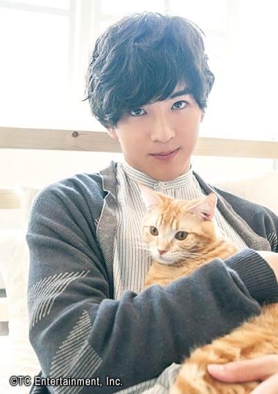 俳優「甲斐翔真」×猫「アメリカンショートヘア」の写真