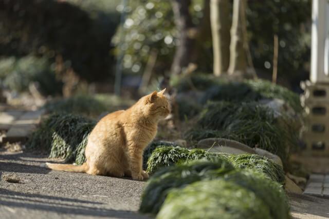 野良猫のイメージ写真3