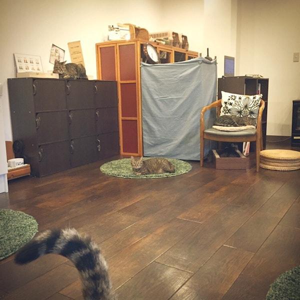 キジトラ専門の猫カフェ「cat cafe しましま屋」の店内