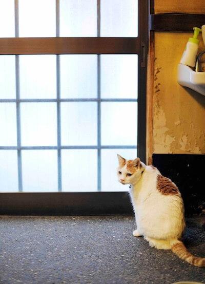 渋谷・つか田の看板猫「チビ太」