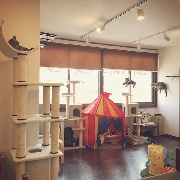 キジトラ専門の猫カフェ「cat cafe しましま屋」の内観