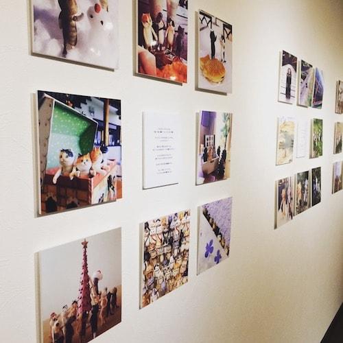 「100匹のどやねこ展」の写真作品