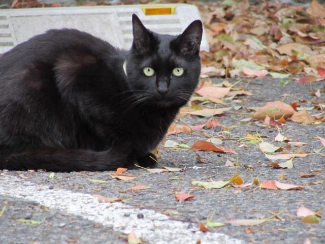 黒猫づくしの本、黒猫マニアックス vol.2の発売が決定!写真も募集中