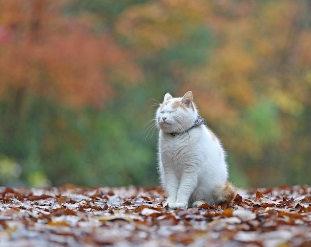 猫カレンダー撮影担当・尾崎修二カメラマンと行く 癒やしの猫を撮る!ツアー