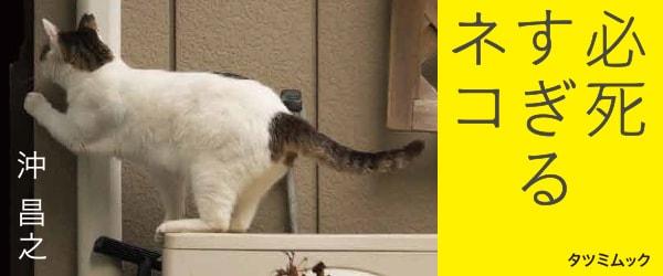 写真集「必死すぎるネコ」