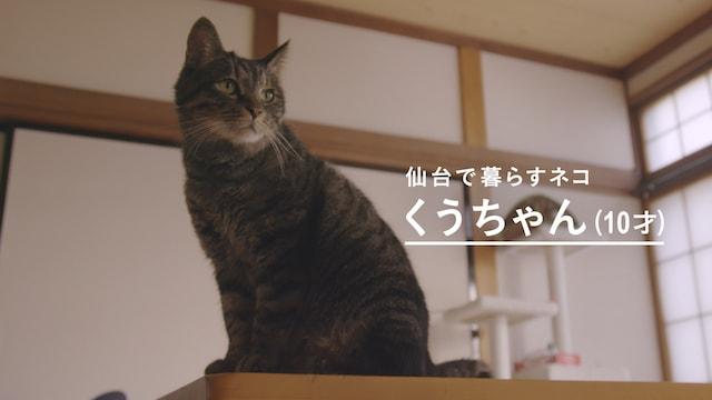 愛猫の「くうちゃん」 by カルカン敬老の日動画「KAL KAN VOICE DELIVERY」