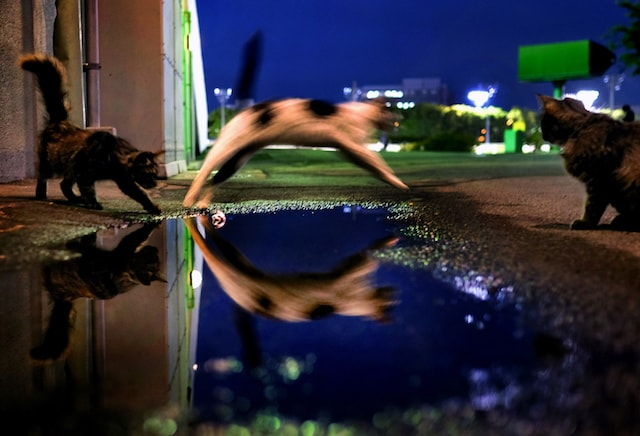 作品性の高い猫の写真 by 池口正和