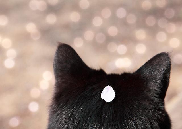 作品性の高い猫の写真 by 矢部一樹