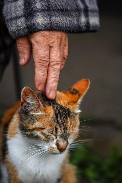 作品性の高い猫の写真 by 吉田裕吏洋
