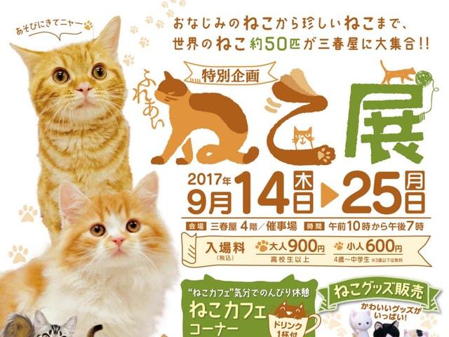 世界中の珍しい猫と触れ合える「ふれあいねこ展」青森県八戸市で開催