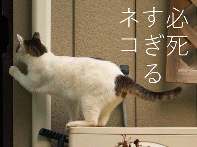 猫写真家・沖昌之さんの新作写真集は「必死すぎるネコ」ですニャ