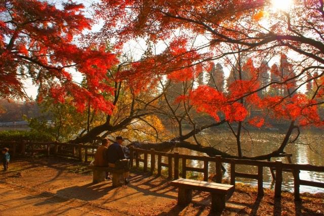 井の頭公園、秋の風景