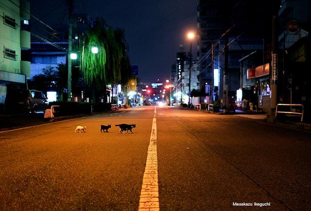 東京・大阪2都猫物語の猫写真 by 池口正和