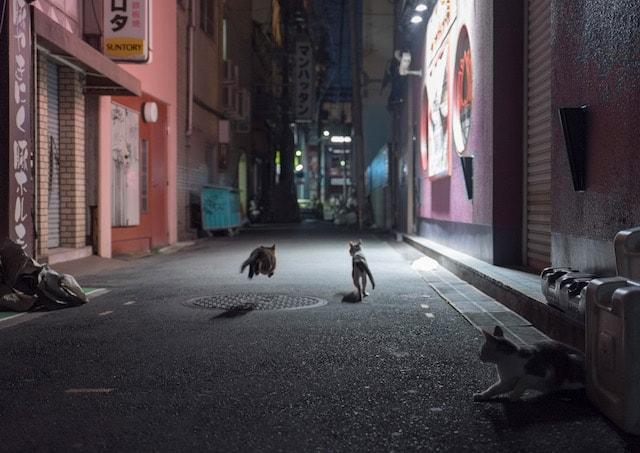 東京・大阪2都猫物語の猫写真 by 河井蓬