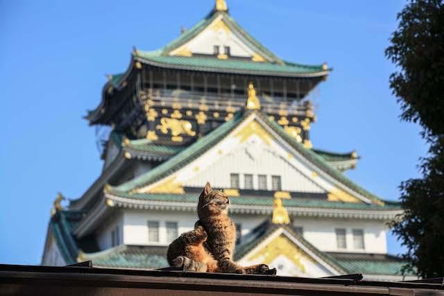 東京・大阪2都猫物語の猫写真 by 阪靖之