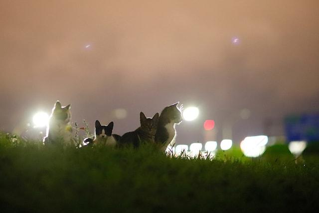 東京・大阪2都猫物語の猫写真 by 星野俊光