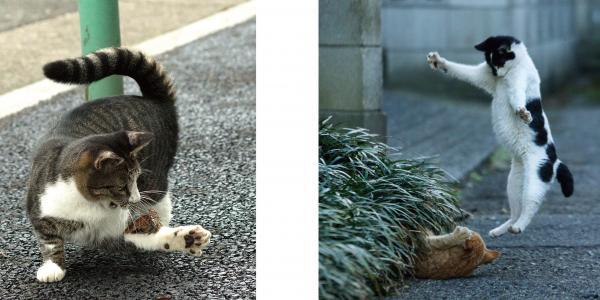 写真集「必死すぎるネコ」に登場する必死なネコたち