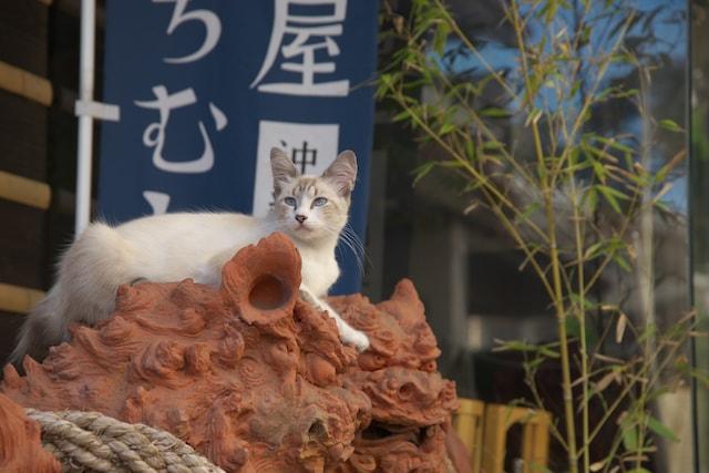 地域密着の猫写真 by 上林利寛