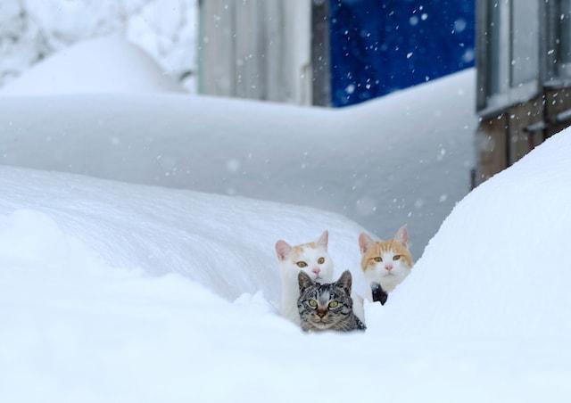 地域密着の猫写真 by 熊谷忠浩