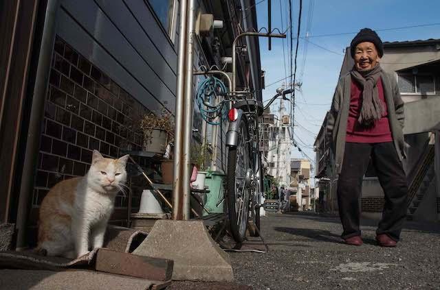 地域密着の猫写真 by 阪靖之
