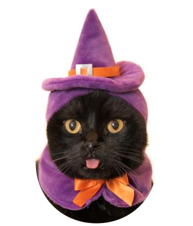 かわいい かわいい ねこハロウィンちゃん、魔女バージョン