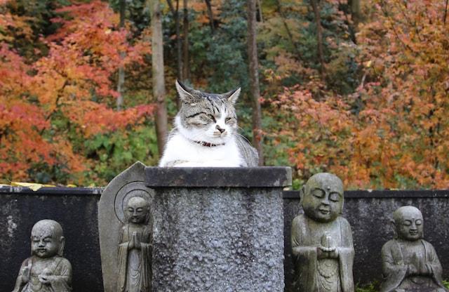 猫寺・御誕生寺のネコ