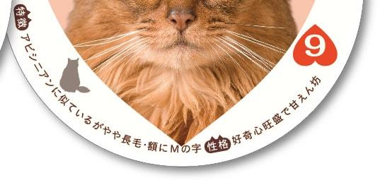 猫トランプの下には、猫種や毛色ごとの特徴を記載
