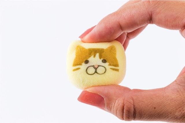 雑貨ブランド・KOZACLA(コザクラ)の猫の鳳瑞(ほうずい)