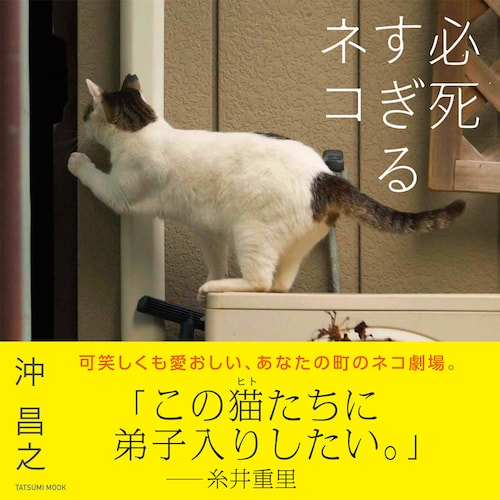 沖昌之・写真集「必死すぎるネコ」の表紙、帯コメントは糸井重里さん