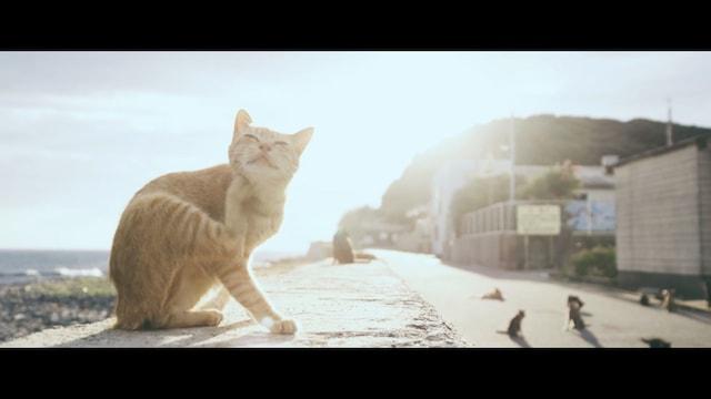 猫島で撮影したエド・シーランのミュージックビデオ